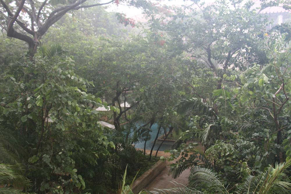 monsoon Dharmawangsa